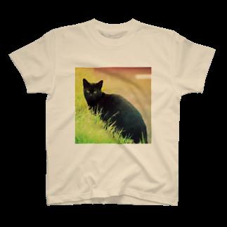 こんにゃくいもの黒猫 T-shirts