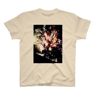 虹と木 T-shirts