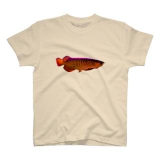 金のアロワナ T-shirts