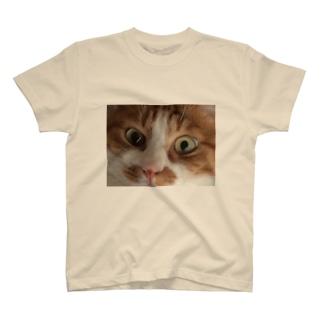 ねこのめ T-shirts