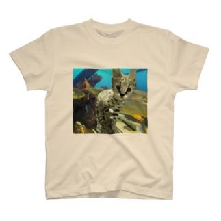 アクア仔サーバル T-shirts