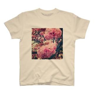 八重桜(レトロ) T-shirts