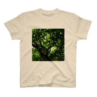水の緒 T-shirts
