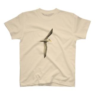 ぐーきちの雑貨屋のコアジサシ  2 T-Shirt