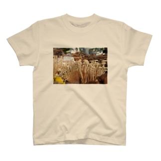 きのこ山 T-shirts
