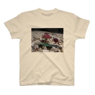 きのこさん T-shirts