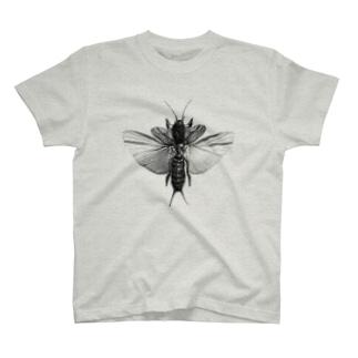 オケラtee T-shirts