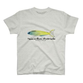 オウゴンニジギンポTシャツ T-shirts