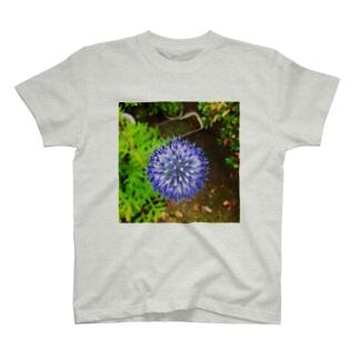 ヒゴタイ       T-shirts