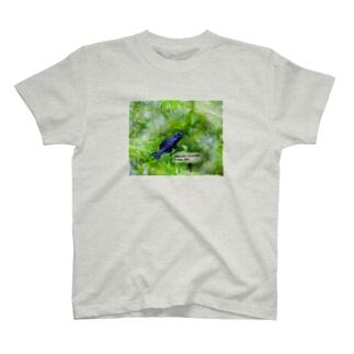 Elassoma evergladei T-shirts