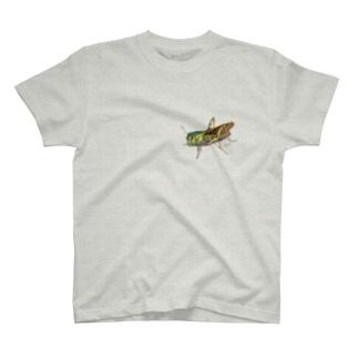 Grasshopper T-shirts