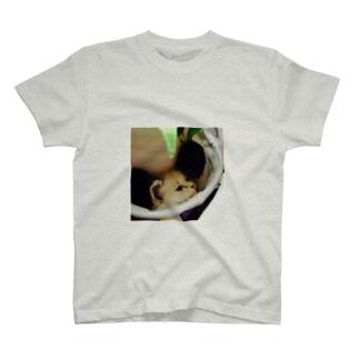 にゃんこT T-shirts