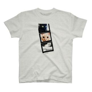 NEKOKOKORO 猫たち T-shirts