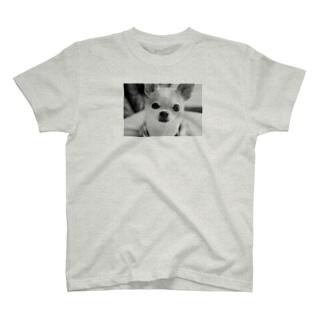 モノクロチワワ(おすまし) T-shirts