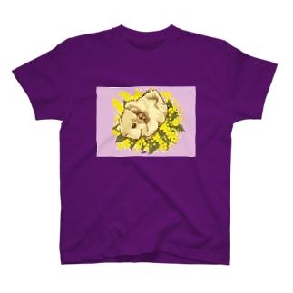 2019 February T-shirts