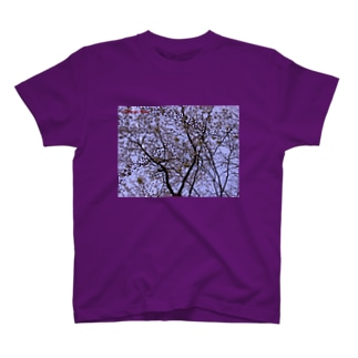 桜 サクラ cherry blossom DATA_P_108 T-shirts