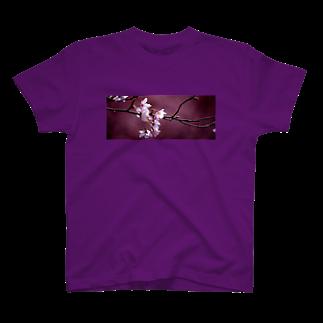 M.F.Photoの桜とあずき色 Tシャツ