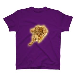 GOLDEN HAMMER T-shirts