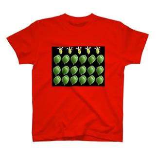 熊童子 T-shirts