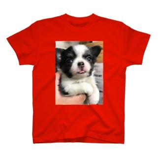 チビチワ T-shirts