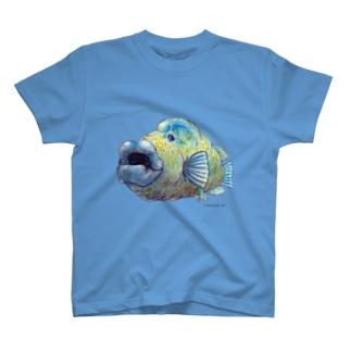 ナポレオンフィッシュ T-shirts