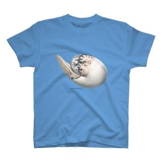 Damesites damesi(アンモナイト) T-shirts