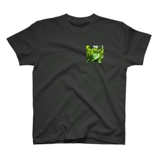 蓮の葉 T-shirts