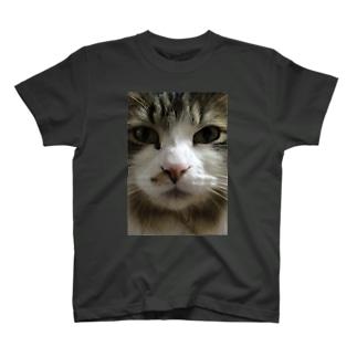 メインクーンの福助 T-shirts