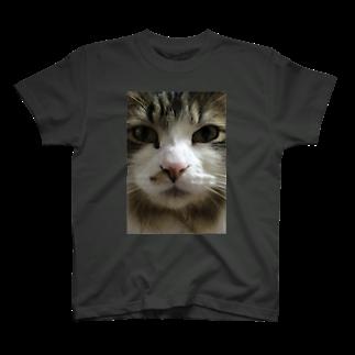 玉麩のうちの子自慢のメインクーンの福助 T-shirts