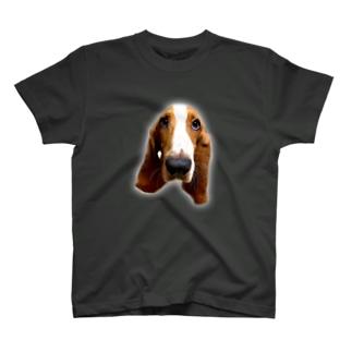 バセット Tシャツ T-shirts