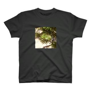 松の心 T-shirts