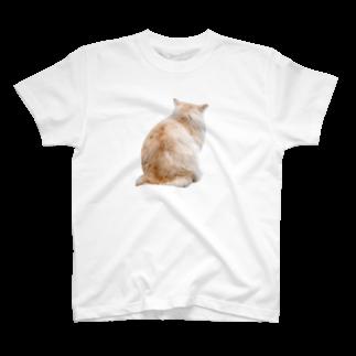 Yusuke SAITOHの猫 Tシャツ