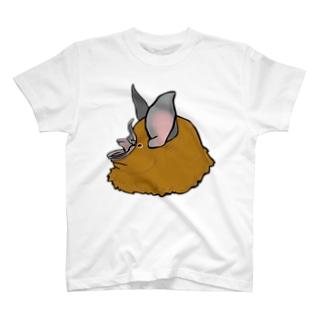 キクガシラコウモリ Tシャツ
