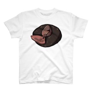 ユビナガコウモリ Tシャツ