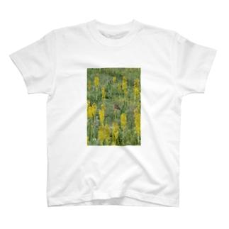 ナキウサギinメタカラコウ2 Tシャツ