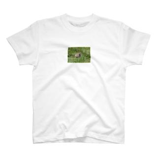 にこにこナキウサギ Tシャツ