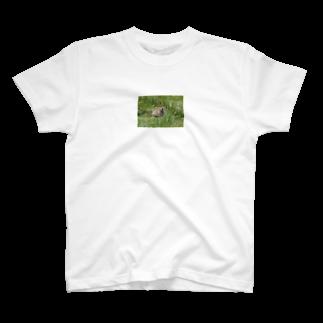 ゆきうさぎ工房のにこにこナキウサギTシャツ