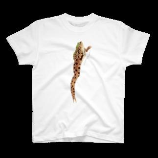 TONTON ANIMALSのTONTON-ANIMALS『トノサマガエル』 Tシャツ