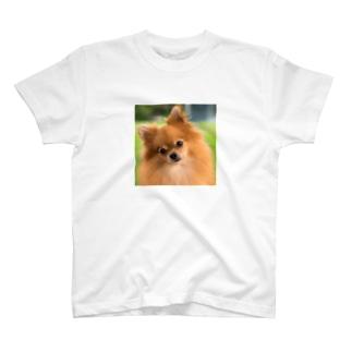a Tシャツ