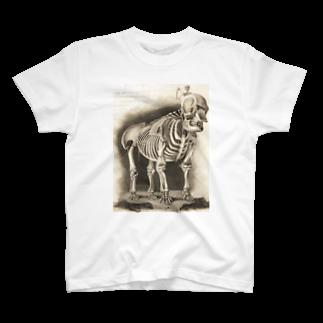 銅版画による人体骸骨 Tシャツ