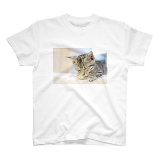 おひるね子猫(マンチカン) Tシャツ
