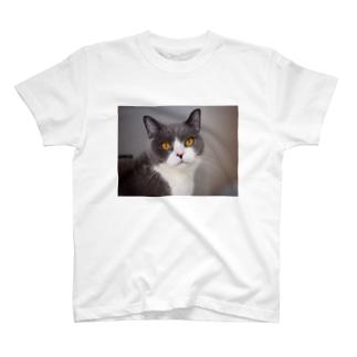 ハチワレねこクール Tシャツ