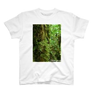 タイの森 Tシャツ