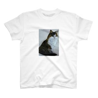 猫のデザイン 油絵 Tシャツ