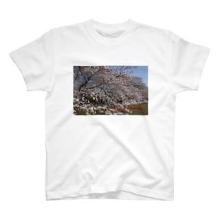 光景 sight0070 桜 2015_015 サクラ Tシャツ
