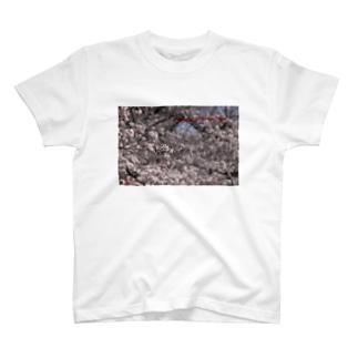 光景 sight0071 桜 2015_016 サクラ  Tシャツ