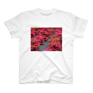 ツツジ azalea DATA_P_118 Tシャツ