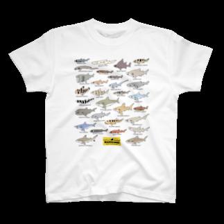 幻想水系branch byいずもり・ようのSharks30(color)1.1Tシャツ