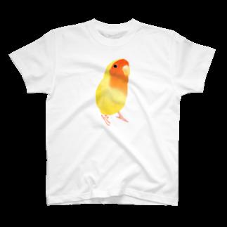 まめるりはことりのコザクラインコ おすましルチノー【まめるりはことり】Tシャツ