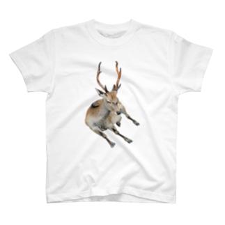 鹿 Tシャツ